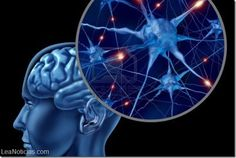 """Comprendemos lo que hacen los demás gracias a las llamadas """"neuronas espejo"""" - http://www.leanoticias.com/2014/02/24/comprendemos-lo-que-hacen-los-demas-gracias-las-llamadas-neuronas-espejo/"""