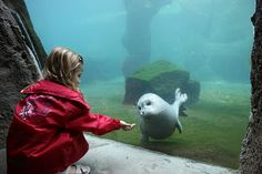 Zoo am Meer Bremerhaven Robbe