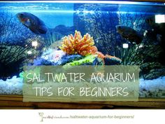 All the basics of how to select tanks, prep water & add exotic fish in the guide for saltwater aquarium for beginners in 10 easy steps!