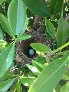 Bird's nest
