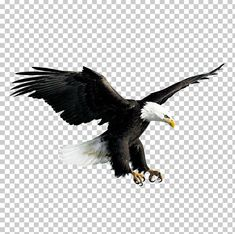 This PNG image was uploaded on February pm by user: Murph_adam and is about Accipitriformes, Animal, Animals, Bald Eagle, Beak. Photo Background Images Hd, Blur Background In Photoshop, Blur Image Background, Blur Background Photography, Smoke Background, Studio Background Images, Eagle Background, Gouda, Png Images For Editing