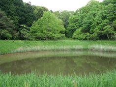 Sacred Pond 6 May, 2012
