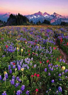Amazing Things in the World - isqually Vista, Mt. Rainer, Washington