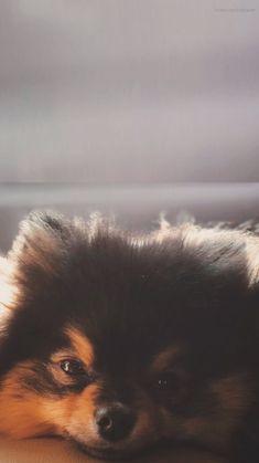 Cute Dog Wallpaper, Bts Wallpaper, Foto Bts, Bts Photo, Bts Taehyung, Namjoon, Bts Dogs, Cute Dogs And Puppies, Cute Little Animals