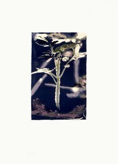LUC TUYMANS - PLANT (GENE) -KUNZT.GALLERY  http://www.widewalls.ch/artwork/luc-tuymans/plant-gene/ #Print