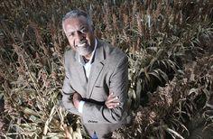 Professor Gebisa Ejeta received a generous grant to help develop hybrid grain seeds that will resist parasite weeds. World Food Prize, Oromo People, Global Food Security, Purdue University, Team S, Professor, Gates, Foundation, Seeds