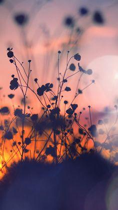 Night Nature Flower Sunset Dark Shadow Red Flare #iPhone #6 #plus #wallpaper
