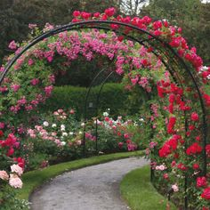 beautiful rose archway ~ seen at http://www.vanmeuwen.com/garden-supplies/plant-protection-and-support/rose-arch/69511VM