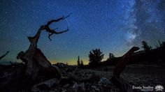 Ascendance by Henry Jun Wah Lee / Evosia. Play full screen so you can count the meteors! Shot in Joshua Tree National Park and the Ancient Bristlecone Pine Forest during the Perseid meteor shower. Features ancient trees, lightning, rainbows, meteors, the Milky Way, and lots of stars. Enjoy!