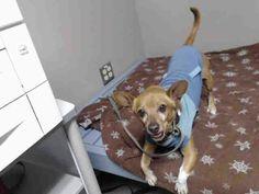 Adopting Shelter Dog Housebreaking