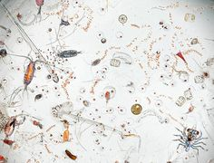 This extraordinary photo shows a random splash of seawater, magnified 25 times