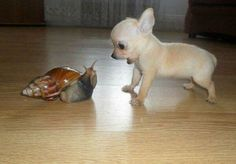 snail and puppy