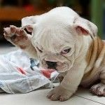 10 of the Cutest Puppies in the World