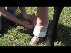 Did you know the most common misuse of vet wrap is to wrap a leg with no padding underneath the vet wrap? Video on how to properly apply vet wrap.