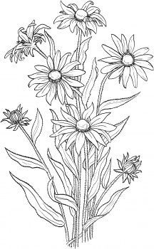 Rudbeckia Hirta or Black Eyed Susan coloring page from Black-eyed susan category. Select from 27682 printable crafts of cartoons, nature, animals, Bible and many more. Flower Coloring Pages, Coloring Book Pages, Flower Sketches, Floral Drawing, Printable Crafts, Printables, Black Eyed Susan, Free Printable Coloring Pages, Flower Doodles