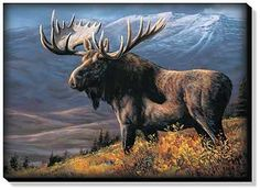 Cooper Moose by Rosemary Millette