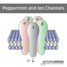 Peppermint & Ion Channels