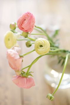 Flower photography - fine art photography print - flower light dreamy whimsical home decor summer photograph pink yellow on Etsy, kr Pastel Flowers, My Flower, Fresh Flowers, Beautiful Flowers, Spring Flowers, Flower Lights, Plantation, Delphinium, Ranunculus
