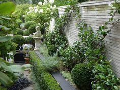 Espaliered Chinese Star Jasmine, Trachelospermum jasminoides | A formal garden apartment, HEDGE Garden Design & Nursery