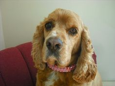 Pink Dog Collar Elegant Dog Jewelry  Beaded Dog by k9knitknots