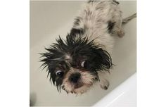 27 Hilariously Sad Dogs Who Do Not Want A Bath (Slide #28) - Pawsome