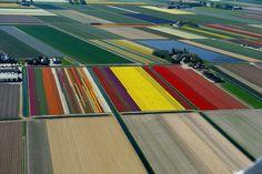 Het is maart, het is mooi weer en dat betekent dat de tulpenvelden in Nederland…
