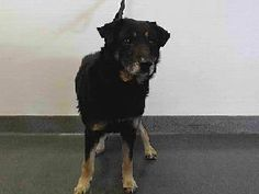 Buena Park, CA, kill animal shelter dog who needs prayers, sharing on Facebook, Rescue/Adopt.  German Shepherd, hopeful and confused.