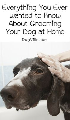 Save time & money by grooming your dog at home. Here's everything you need to know about it!