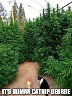 Weed Humor, Cat Memes, Weed Funny, Medical Marijuana, Stoner Humor, Ganja, Funny Cats, Funny Animals, Gardens