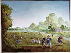 An 18th-century painting of Chinese peasants planting rice
