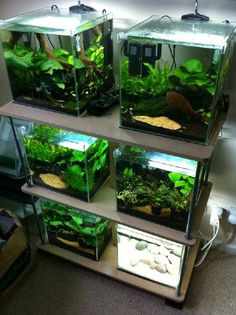 This would be great for bettas! Or shrimp. Nice cube tanks.  Fluval ebi tanks are like these. These tanks are being discontinued.