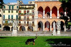 Photo made in Prato della Valle in Padua in Veneto (Italy). In the image, taken by Memmia island's center, you see, in the foreground, a dog that is at the center of the island lawn. Beyond the perimeter road you are seen framed by two trees and by the blue sky, a building with flowering plants on the balconies and the loggia Amulea rich with large arches supported by white columns.