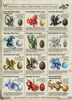 some different types of dragons