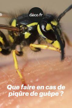 CollectA BOURDON JOUET EN PLASTIQUE sauvage animal d/'élevage d/'insectes nouveaux
