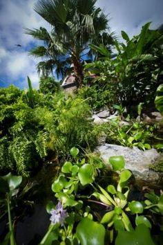 Lily Pond gardens on Saba