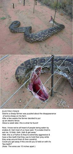 I don't like snakes but this picture I had to pin.