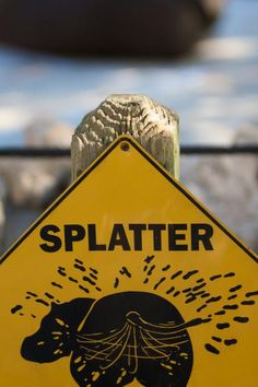 """'Splatter zone!' the full sign reads. Nice. Unless you didn't heed the warning. Then not nice. Definitely not nice. A classic from Florida's Homosassa Springs Wildlife State Park."""