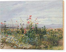 Wildflowers With A View Of Dublin Dunleary (Dun Laoghaire) Wood Print by A Nicholl