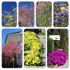 Springtime and blooming in SF Bay Area