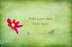 Customizable Flower Photograph wildflower by jstrandphotography
