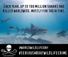 news-150303-1-UNWorldWildlifeDay-sharks-facebook5-472w