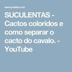 SUCULENTAS - Cactos coloridos e como separar o cacto do cavalo. - YouTube