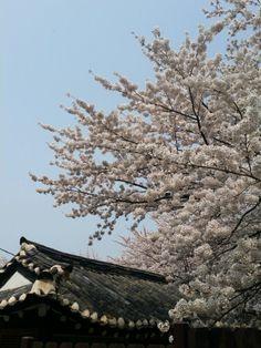 따뜻한봄날에 벚꽃나들이