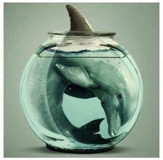 """"""" Ningún delfín que vive en uno de esos acuarios o parques marinos puede ser considerado normal"""" - Jacques Cousteau pic.twitter.com/Bmc9zmlOTG"""