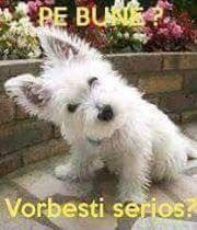 Animals And Pets, Haha, Funny Pictures, Humor, Memes, Dogs, Quotes, Pets, Fanny Pics