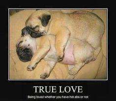 love when my dogs cuddle like this! especially since its usually a pug and a boxer... cutest thing ever!