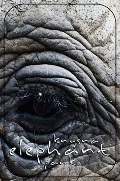 For those of us who grew up reading Dalene Matthee's books, the Knysna forest is synonymous with elephants. Who can forget the struggles of the forest people d African Elephant, Cape Town, Elephants, South Africa, Places To Visit, Garden, Blog, Photography, Rice