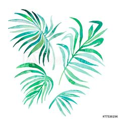 Watercolor palm leaves isolated on white.Vector for your design.