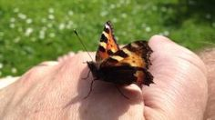 A butterfly on my hand :), via YouTube.
