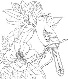 Click Mockingbird And Magnolia Mississippi State Bird Flower Coloring Page For Printable Version Make
